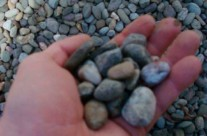 3/4″ Round River Stone – bulk product comes mixed with soil and may need to be washed before spreading.