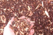 Hemlock Mulch – it has a red color, and is the second most common mulch used in landscape but the most expensive. It holds its color very well.