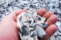 Native Sea Shells – Commonly used in driveways. Has a distinct odor which quickly dissipates after installation.
